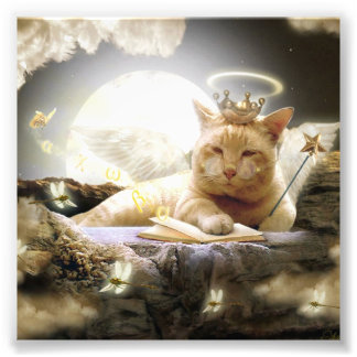Cat in heaven Photo Prints.