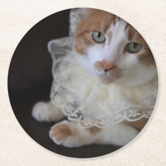 Cat in lacy collar round paper coaster