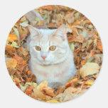 Cat in leaves round sticker