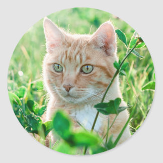 Cat in Nature Round Sticker