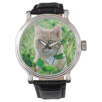 Cat in Nature Watch