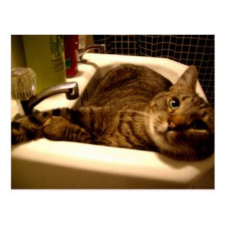 cat in sink Postcard