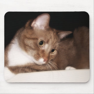 Cat in Soft Light Mouse Pads