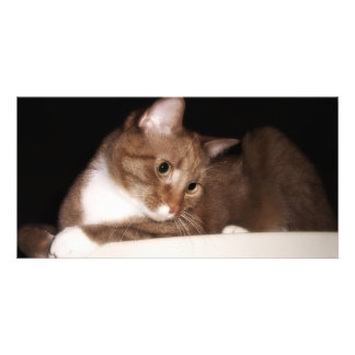 Cat in Soft Light Photo Cards