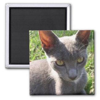 Cat in Sunlight Square Magnet