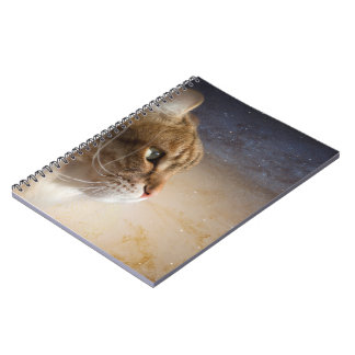 Cat in the Andromeda galaxy Notebooks