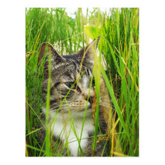 Cat in the Grass Postcard