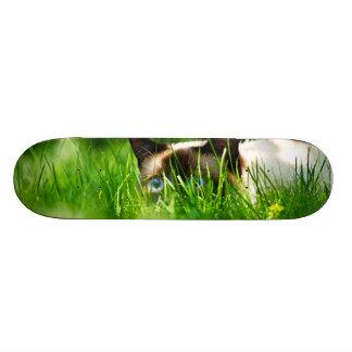 Cat in the Grass Skate Deck