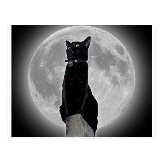 Cat in the Moon Postcard