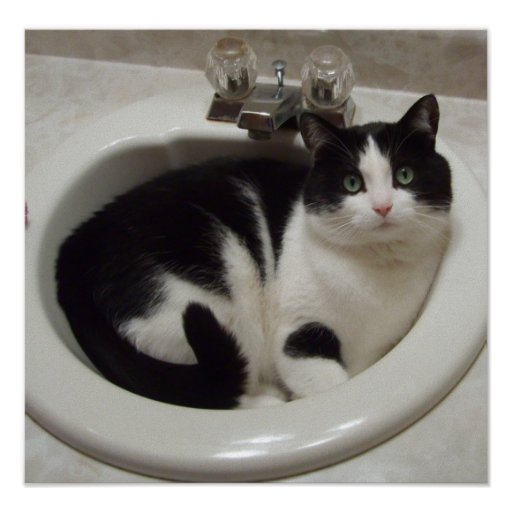 Cat in the sink poster