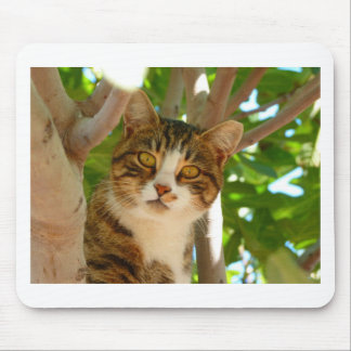 Cat in the Tree Mouse Pads