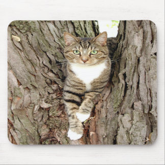 Cat in tree mouse mats