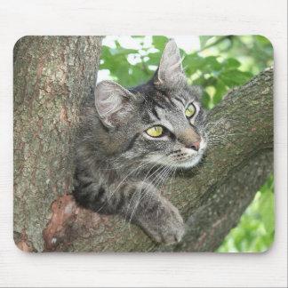 Cat in tree mousepads