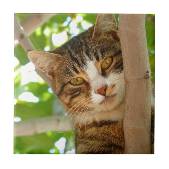 Cat in Tree Small Square Tile