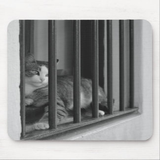 Cat in Window Mouse Pad