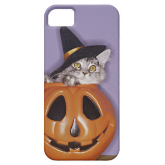 Cat in witch hat inside pumpkin barely there iPhone 5 case