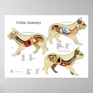 Cat Internal Organ Anatomy Veterinary Chart Poster
