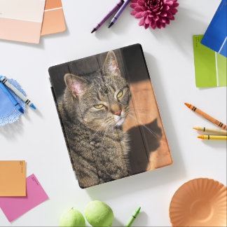 cat iPad cover