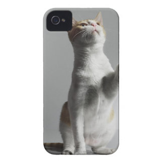 cat iPhone 4 Case-Mate cases