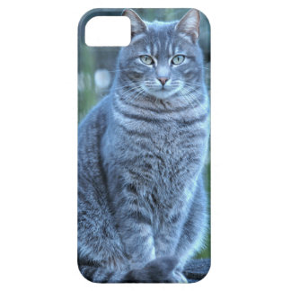 Cat iPhone 5 Cases