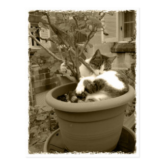 Cat is taking A nap in A plans pot Postcard