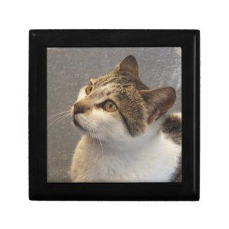 Cat jewelry / gift / trinket box