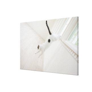 Cat jumping canvas print