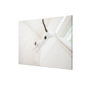 Cat jumping gallery wrap canvas
