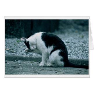 Cat - Kilkenny Ireland Card