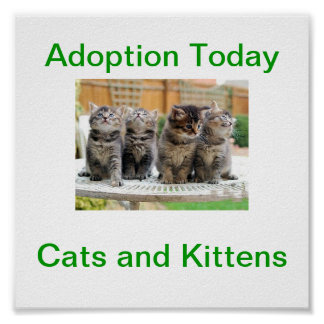 Cat & Kitten Adoption Today Sign Poster