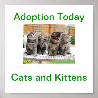 Cat Kitten Adoption Today Sign Print