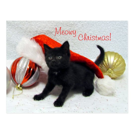 Cat, Kitten, Christmas, Rescue, Photo Postcard