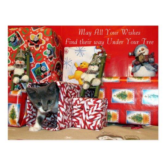 Cat, Kitten, Christmas, Rescue, Photo Postcard