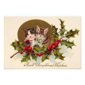 Cat Kitten Holly Winterberry Photographic Print