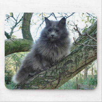 Cat 'Kyra' in a tree Mouse Pads