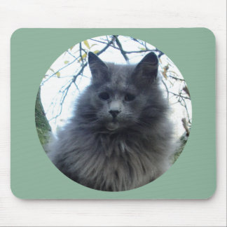 Cat 'Kyra' in a tree Mousepad