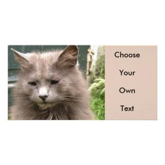 Cat 'Kyra' portrait Picture Card