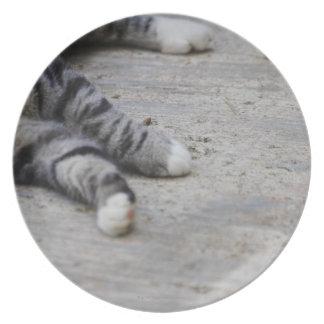 Cat laying on sidewalk plate