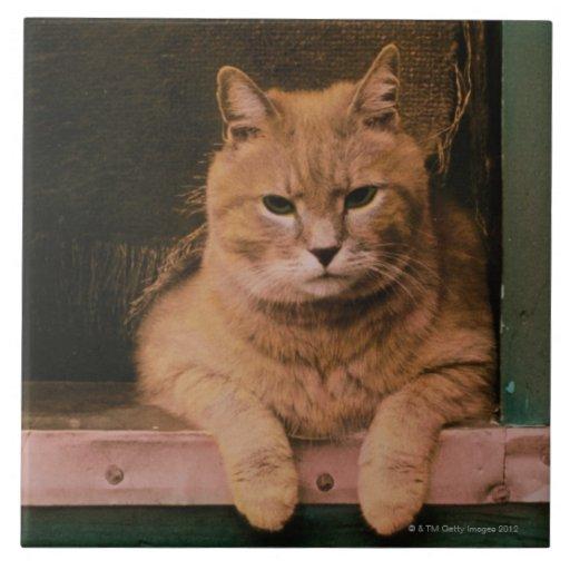 Cat Leans on Windowsill Ceramic Tiles