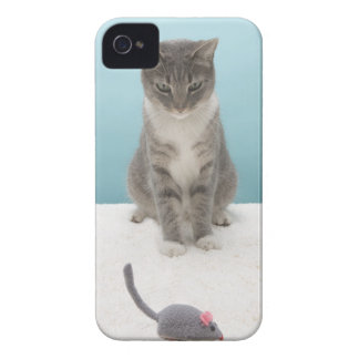 Cat looking at toy mouse on rug iPhone 4 Case-Mate case