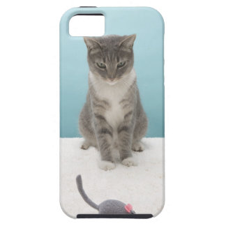 Cat looking at toy mouse on rug iPhone 5 covers