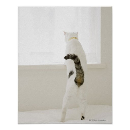 Cat looking out window, rear view print