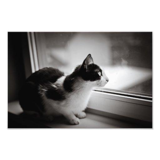Cat looking outside art photo