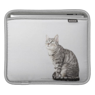Cat looking up iPad sleeve