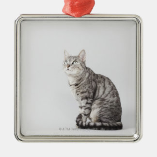 Cat looking up Silver-Colored square decoration