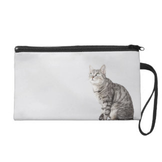 Cat looking up wristlet purses