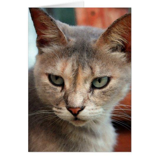 Cat lost in tornado found card