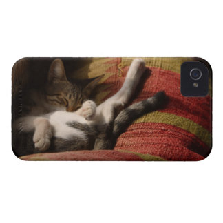 Cat Lounging iPhone 4 Cover