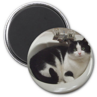 Cat lovers delight 6 cm round magnet