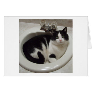 Cat lovers delight greeting card